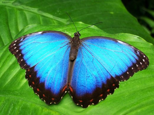 butterfly-142506_640