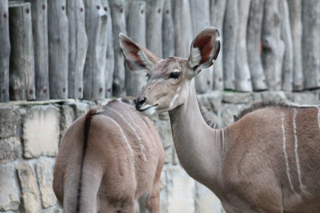 zoo-1561219_1920