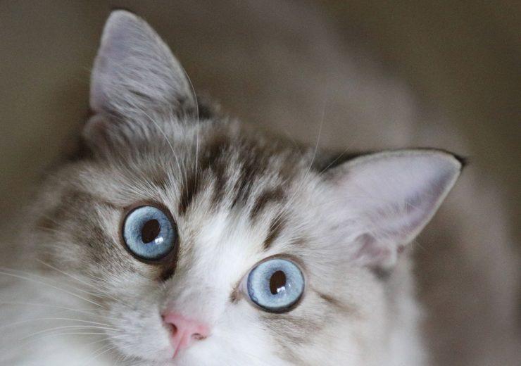 cat-2877288_1920